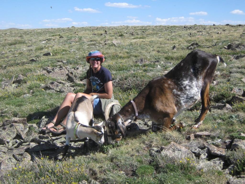 Goats_Nan_Mountain2