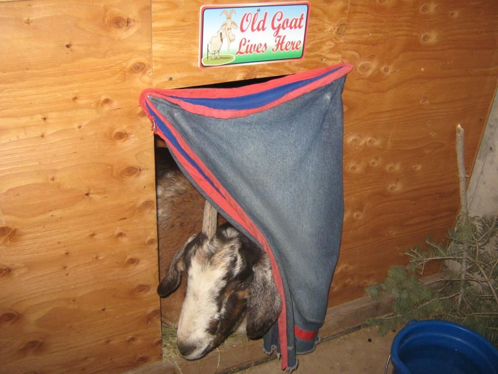 Old_Goat2