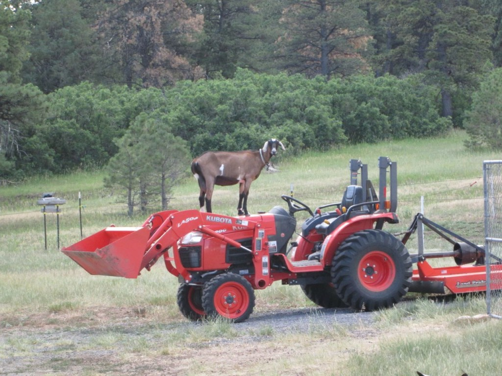 Nubs_Tractor2